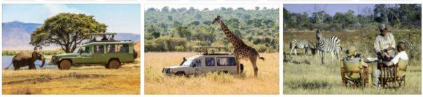 Safari Trips to Africa