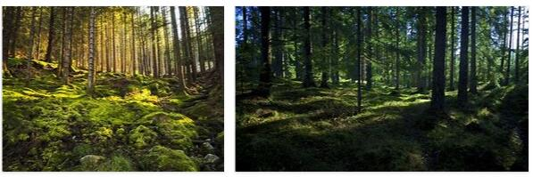 Forestry in Norway 2