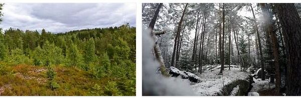 Forestry in Norway 3